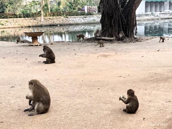 Tham Pla Cave 猴洞
